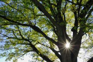 Arbor Day Missouri